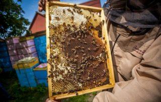 prawdziwy miod ramka pszczela