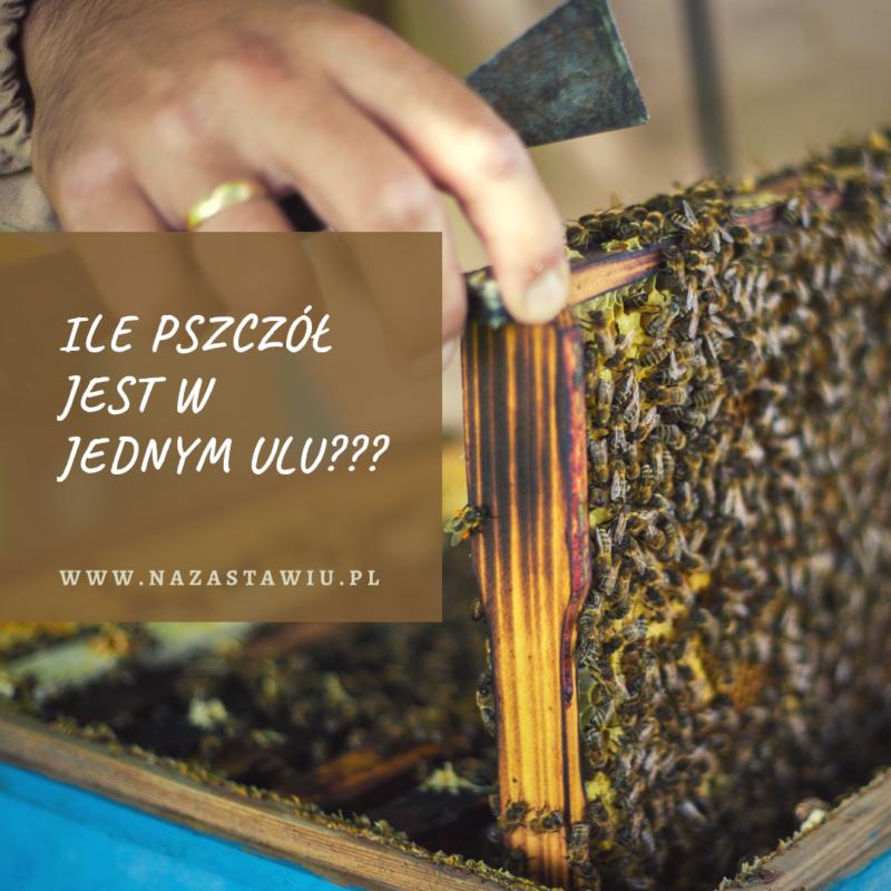 ile pszczol