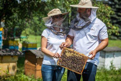 pasieka na zastawiu - miłość do pszczół