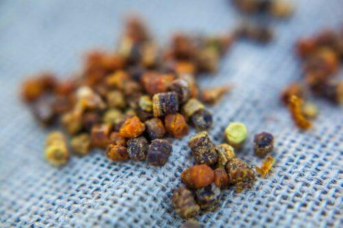 pierzga pszczela produkty pszczele