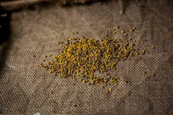pylek pszczeli